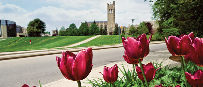 Western University, Graduate Studies - Tulips on University College Hill